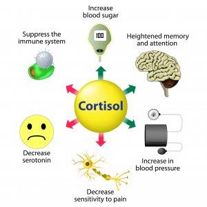 Das Stresshormon Cortisol - Was passiert bei erhöhtem Cortisolspiegel?